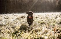 Garmin introduces Atemos 50 / Atemos 100 GPS dog tracking – Reliable tracking for your dog